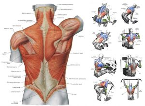Best Back Workouts
