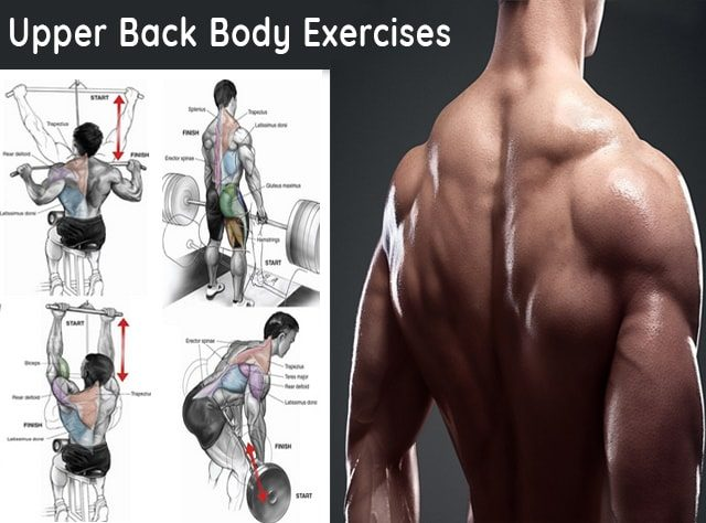 upper back body exercises